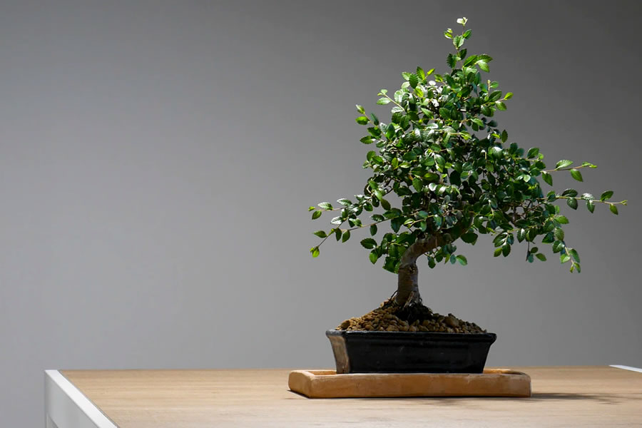 burton shiatsu holistic treatments
